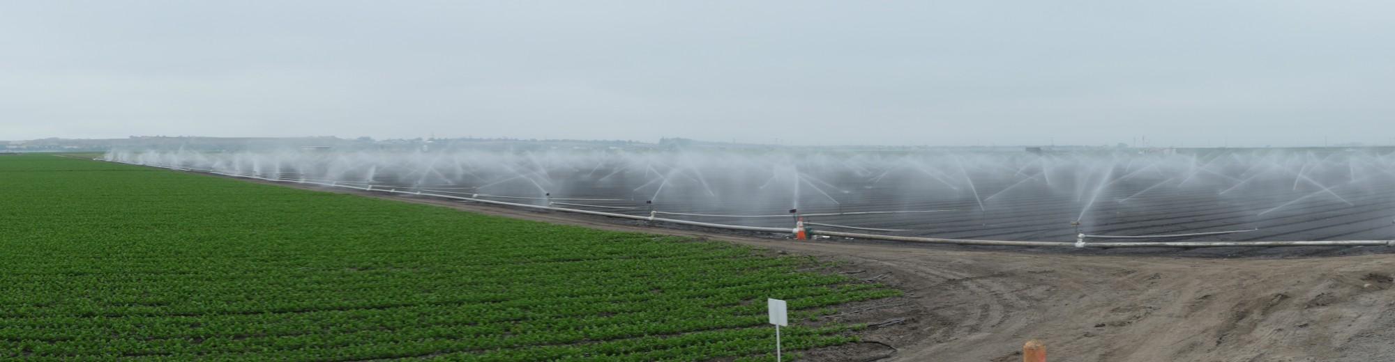 Sprinklers on field