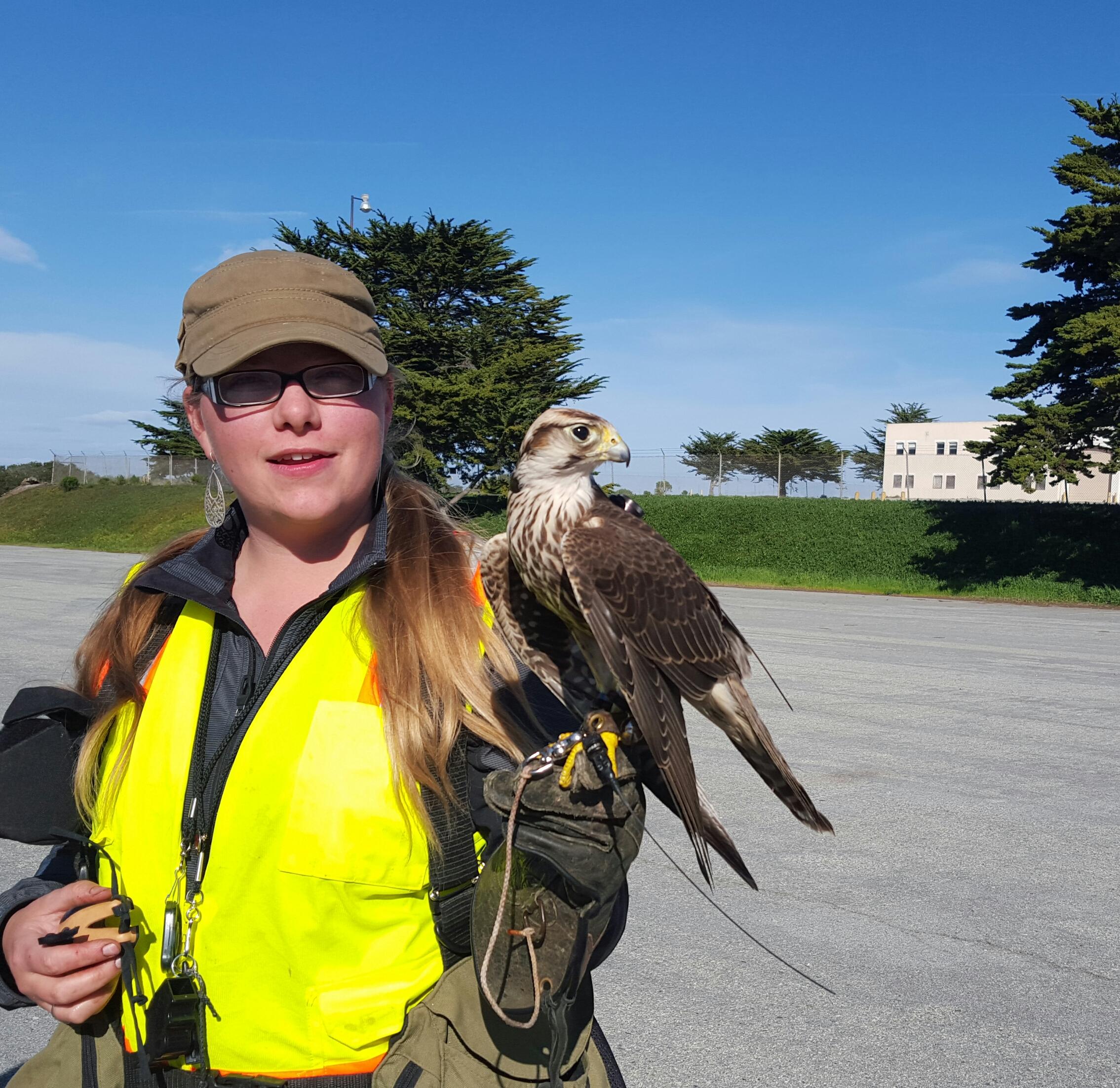 falcon pic