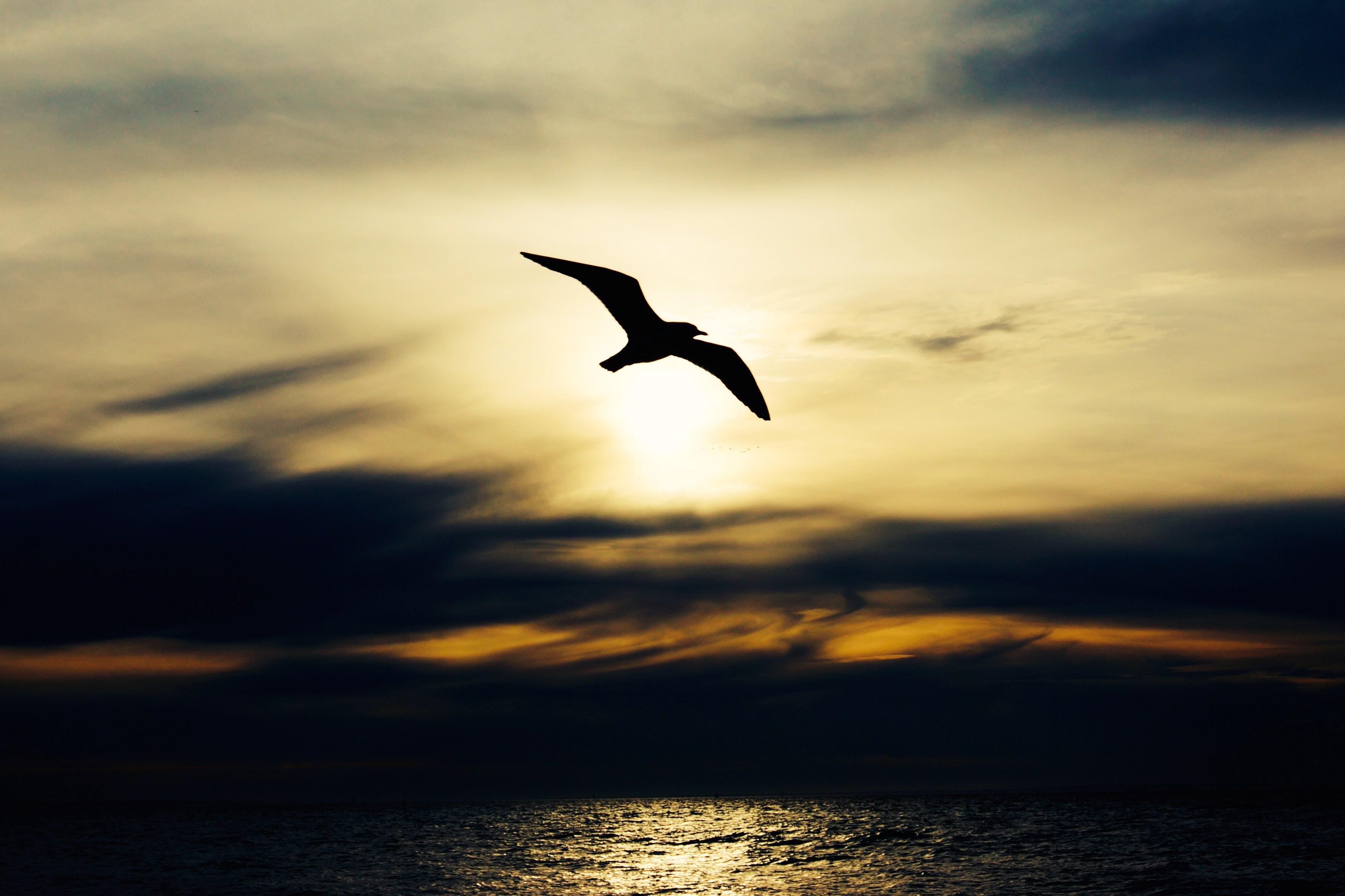 a bird flying over the ocean
