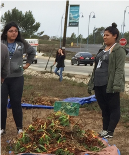 Ice Plant Removal by Summer Bridge Students
