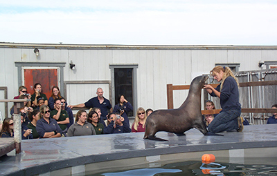 Marine Mammal Training Monterey Bay