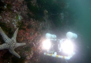 Catalina ROV checks out a seastar underneath the Monterey Commercial Wharf.