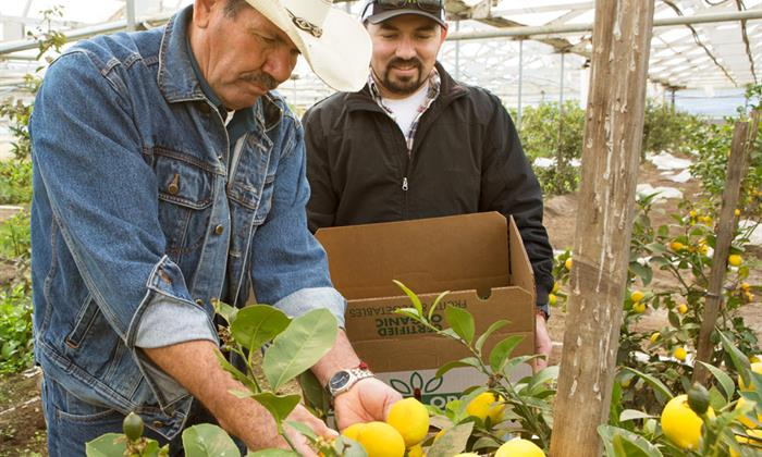 Juan and Pablo started with one acre, then leased a second and a third; eventually they purchased their 10-acre spread, which now has 28 greenhouses, a packing shed, delivery vans, tractors and more.