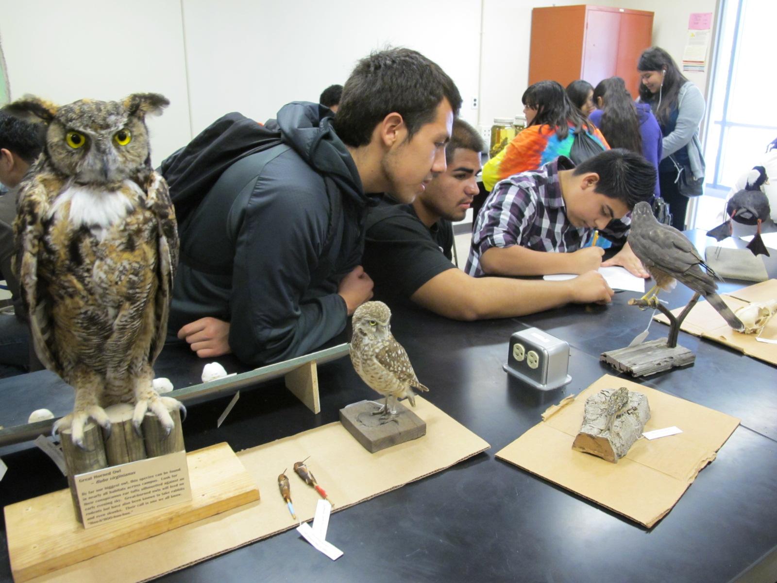 RISE students in UC Santa Cruz Museum of Natural History
