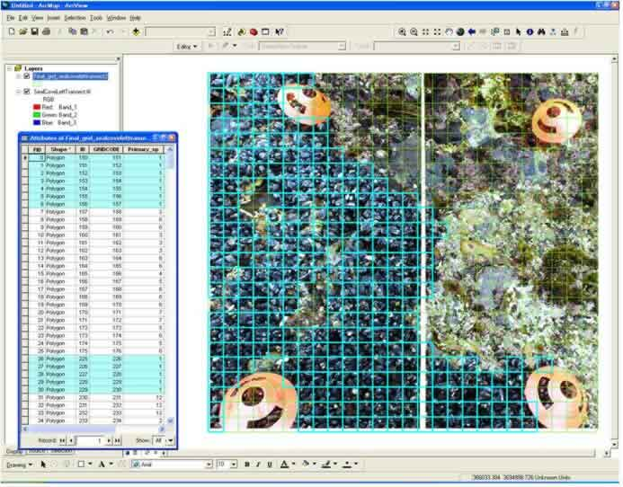 Species image in ArcMap software.