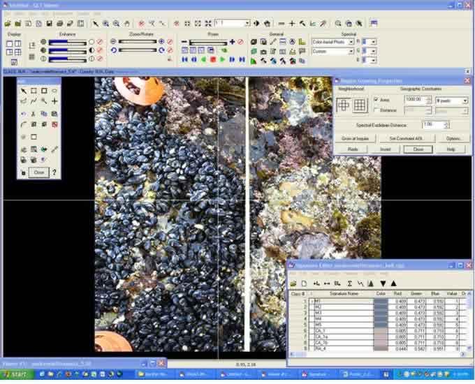 Species image in ERDAS software.
