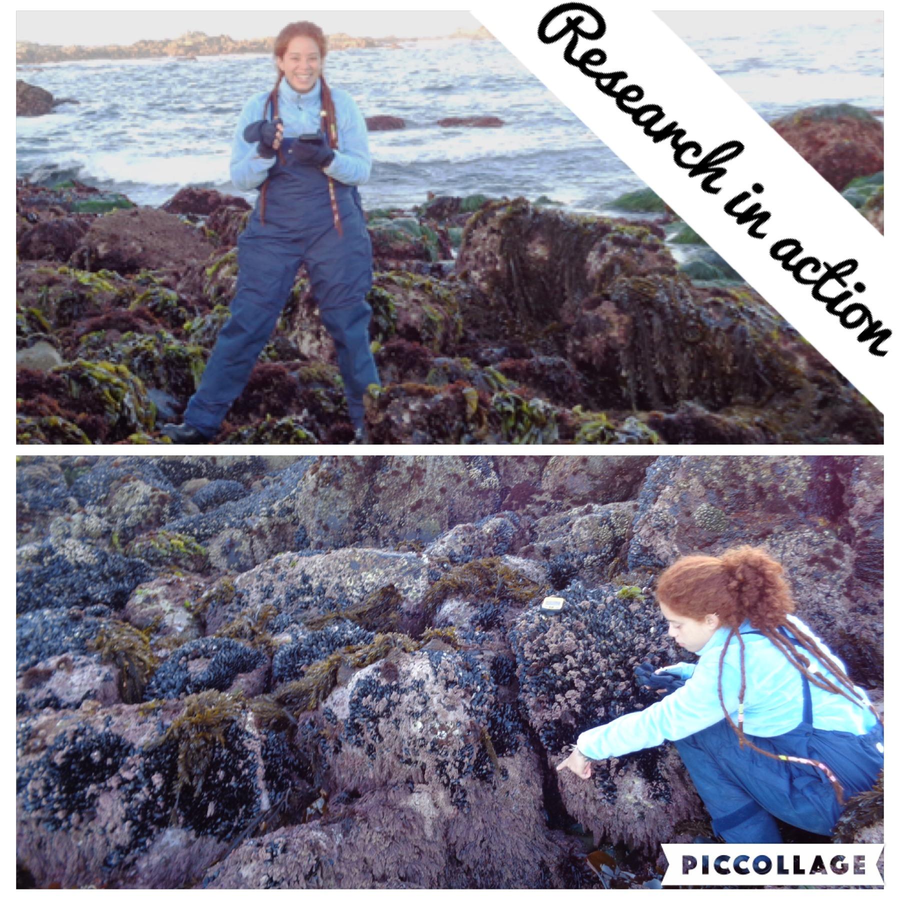 Darimar collecting samples in the intertidal