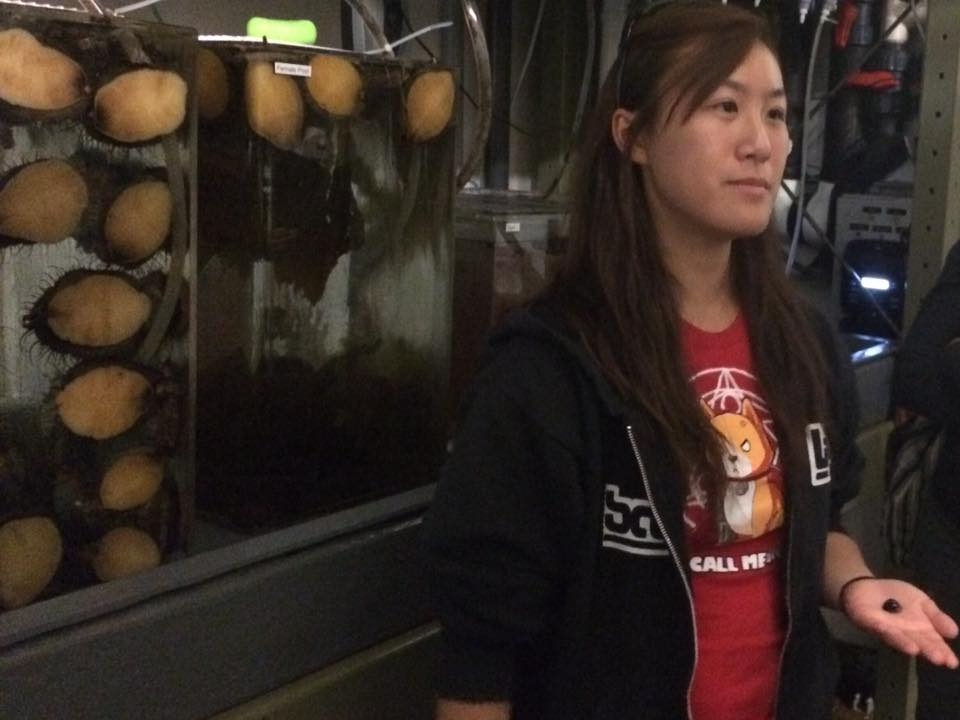 Aileen showing off her tanks of abalone