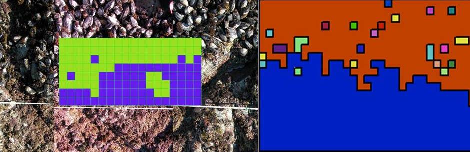 Species boundary representation.